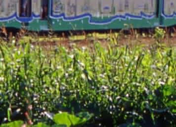 Train touristique de la Vallée du Loir - Vacances insolite à Trôo ©CDT 41 - dsourice