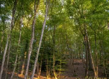 Forêt en Bord de Cher ©Cyril Chigot - Conseil départemental 41