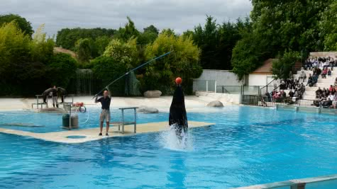 Spectacle des otaries ©ZooParc de Beauval