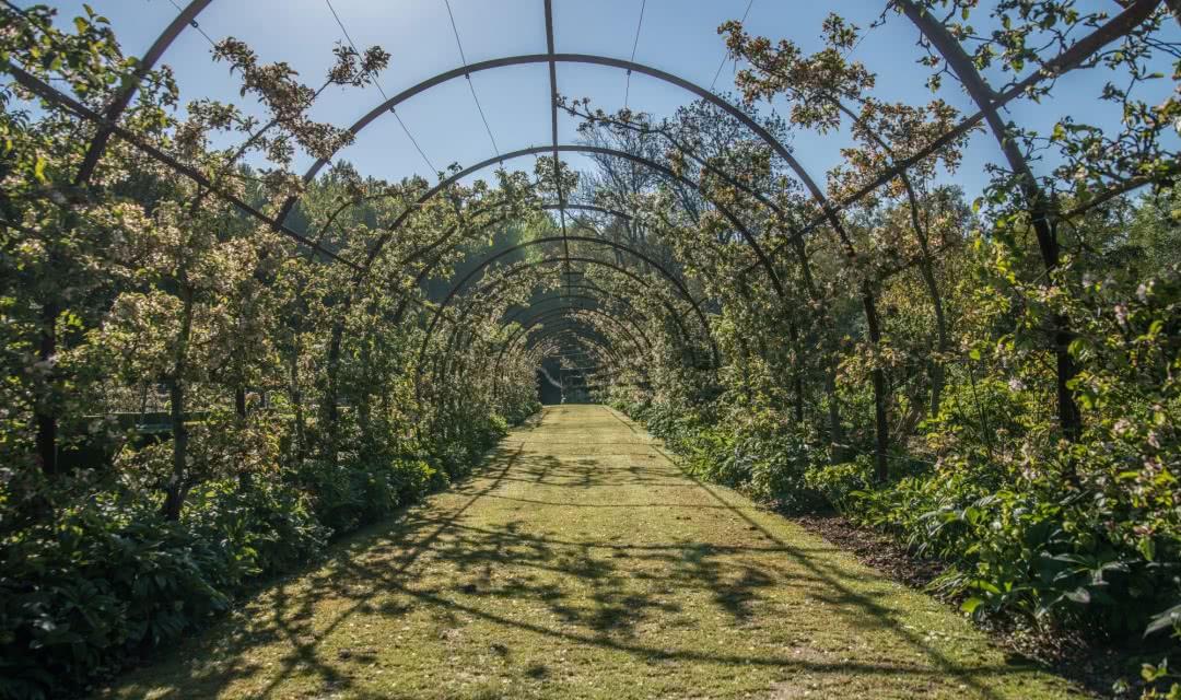 Jardin remarquable du val de loire le jardin du plessis for Au jardin info plantes