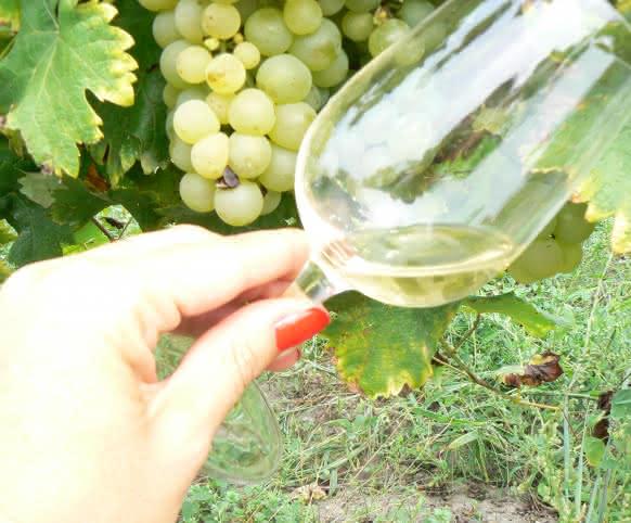 Vacances en Loir-et-Cher - Val de Loire - Vignobles et dégustations ©ADT41-Lygie-Rothon