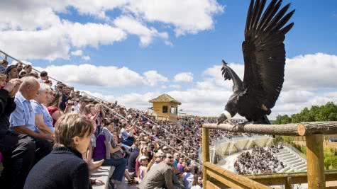 Zooparc de Beauval - Spectacle Oiseaux ©Conseil départemental 41