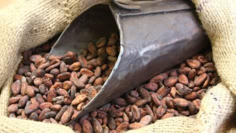 Chocolaterie Max Vauché - Bracieux - Fèves de cacao©CDT41 M Vauche