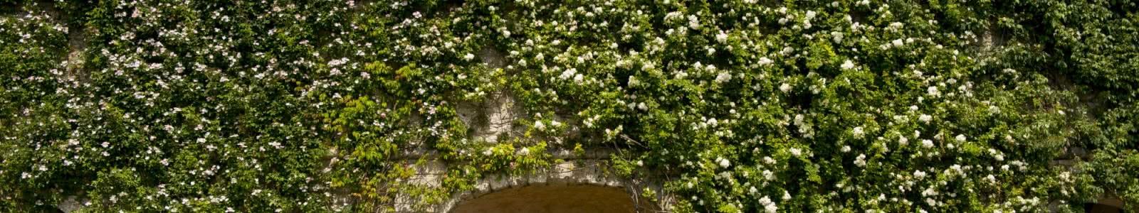Roseraie de Blois - Jardins insolites du Val de Loire - Vacances en Loir-et-Cher Vallée de la Loire - 20 ans du classement Unesco du Val de Loire ©Cyril Chigot - Conseil départemental 41