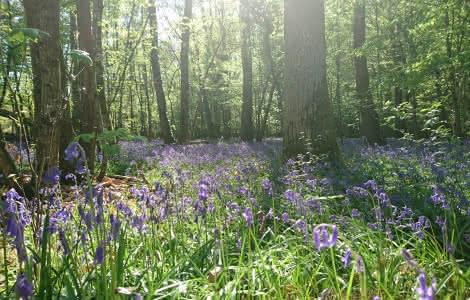Sous bois de Sologne - Vacances nature en Loir-et-Cher Val de Loire ©Katia-Riolet