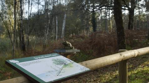 Tablette et grenouille sculptée sur le sentier pédagogique des mares de Pruniers-en-Sologne - Vacances nature en Loir-et-Cher Val de Loire ©Sologne Nature Environnement