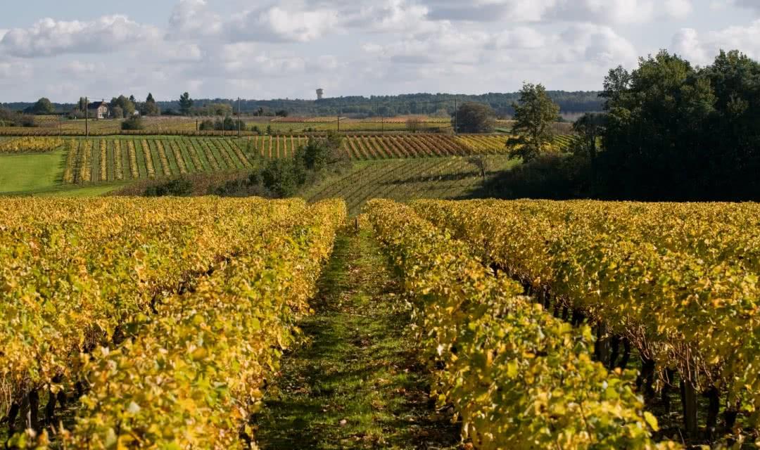 Vallée du Cher - Vignobles AOC Touraine et caves troglodytiques - Vacances oenologiques en Loir-et-Cher Val de Loire ©Jean-Philippe Tesson