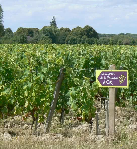 Balade dans les vignes au Domaine de Montcy de Cheverny ©CDT41-albedouet