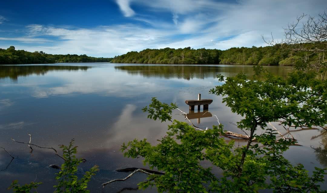 Etang de Sologne - Vacances et sports de nature en Loir-et-Cher Val de Loire ©Laurent-Alvarez-Conseil-Departemental41-(6)