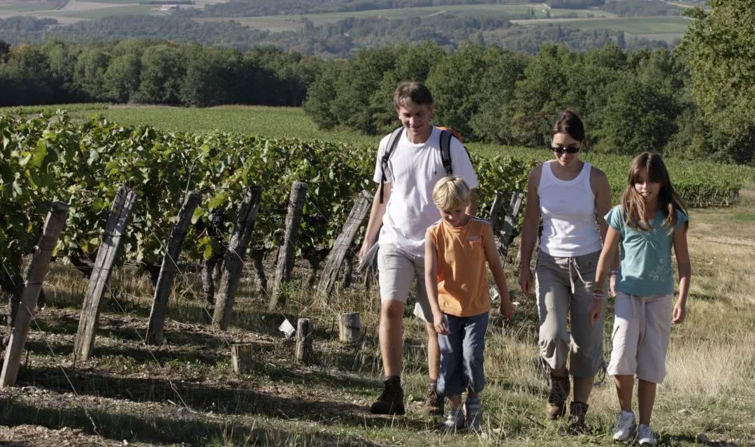 Randonnée pédestre dans les vignobles de la vallée du Cher ©E-Mangeat