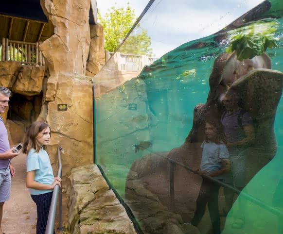 Zooparc de Beauval - Hippopotame ©Cyril Chigot - Conseil Départemental 41