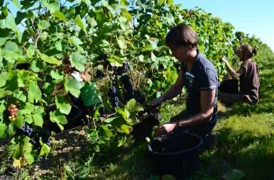 Anne-Cécile Roy - Le Domaine des Roy de Pontlevoy - Femme vigneronne des vins au féminin du Loir-et-Cher en Val de Loire