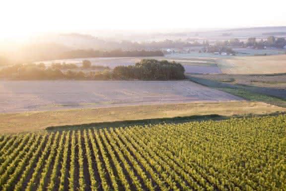 Paysages de la vallée du Loir - Vignes et vignobles en Loir-et-Cher Val de Loire ©Mir-Photo-ADT41 (11)