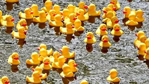 Duck Race de Vendôme en Fête - Vacances en famille en Loir-et-Cher Val de Loire