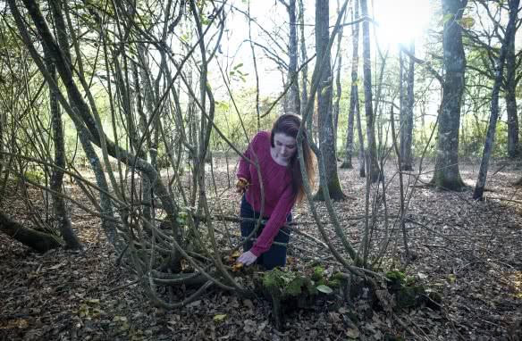 Cueillette de champignons dans les forêts de Sologne - Vacances automne Toussaint en Loir-et-Cher Val de Loire ©D. Templier