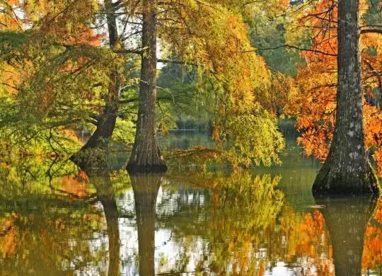 Couleur d'automne parc château de Cheverny