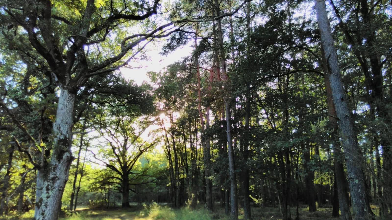 Forêt d'automne en Sologne - Loir-et-Cher Val de Loire ©Cécile Marino