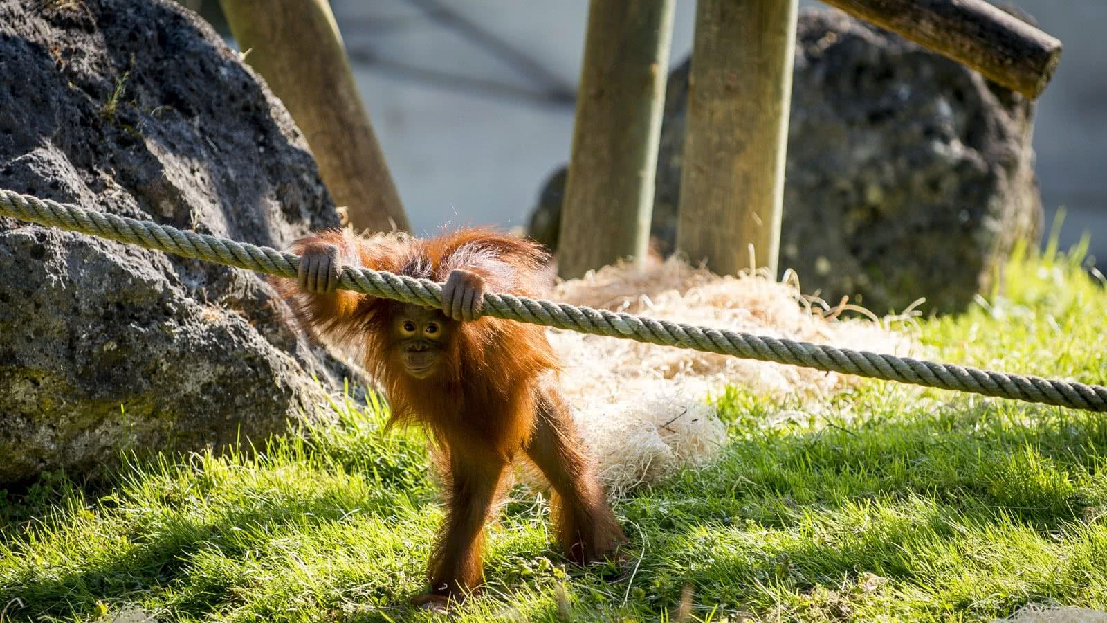 Découvrez le Zooparc de Beauval en loir et cher