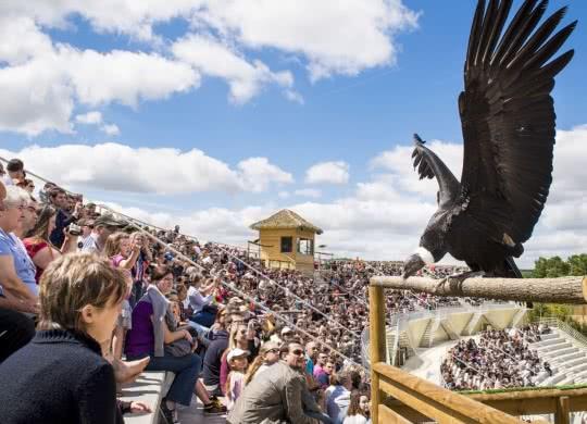 ZooParc de Beuval, le spectacle Les Maitres des Airs - 4è plus beau zoo du monde selon TripAdvisor - Vacances en Loir-et-Cher Val de Loire ©CD41