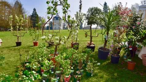 Fête des plantes au château de Cheverny ©Château de Cheverny