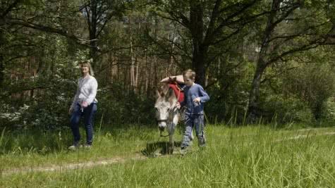 Les ânes de Madame - balades et randonnées accompagnées autour de Chambord ©Alexandre-Roubalay
