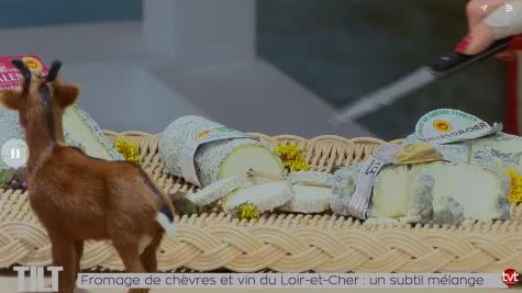 TV Tours - TILT - Fromages de chèvre et vins du Loir-et-Cher en Val de Loire