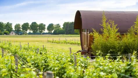 Domaine de Montcy - Vacances insolite dans les vignes autour du château de Cheverny - Loir-et-Cher Val de Loire ©Cyril Chigot - Consei Départemental41