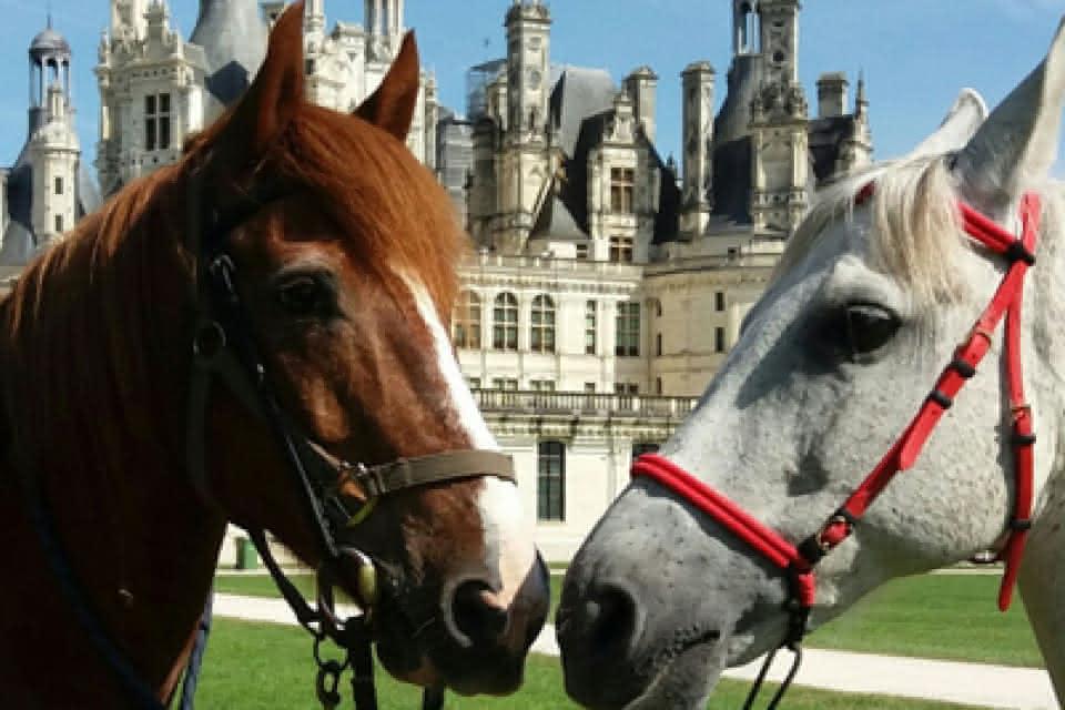 Route Européenne d'Artagnan en Val de Loire - Randonnée équestre au château de Chambord ©Gîtes de la Crapaudière