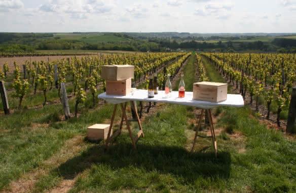 Vigne, vin, rando à Thoré-la-Rochette sur les Coteaux du Vendômois ©VVR2019