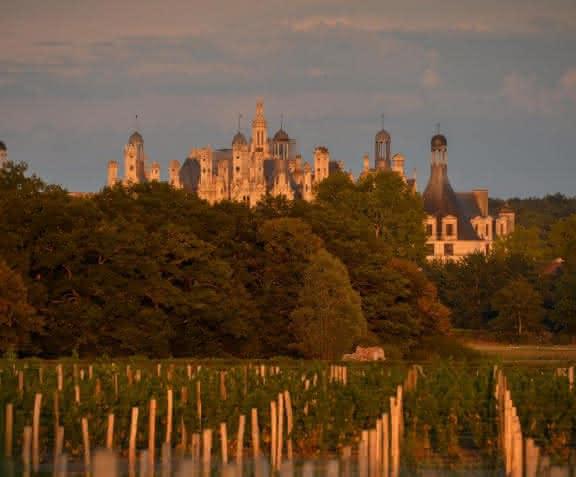 Les vignes de Chambord - Cépage Romorantin AOC Cour-Cheverny ©Léonard de Serre