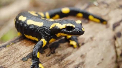 Sortie Salamandres et Dragons d'eau avec Sologne Nature Environnement
