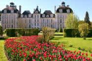 Tulipes au château de Cheverny ©Château de Cheverny