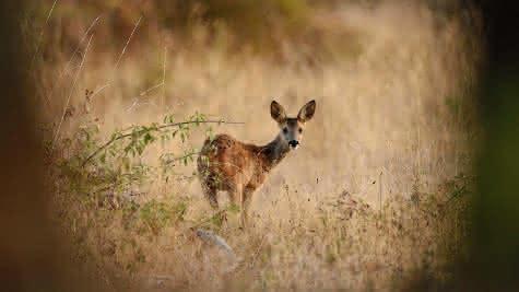 Nature et faune sauvage - Vacances et retrouvailles en Sologne