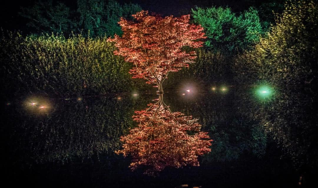Jardins-de-lumieres-Chaumont-sur-Loire_Studio-Mir-ADT41