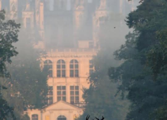 Brame du cerf château de Chambord