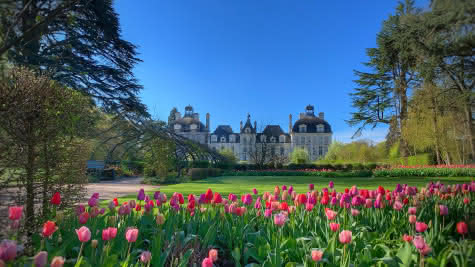 Tulipes-au-chateau-de-cheverny©Mir-Photos-ADT41 (22)