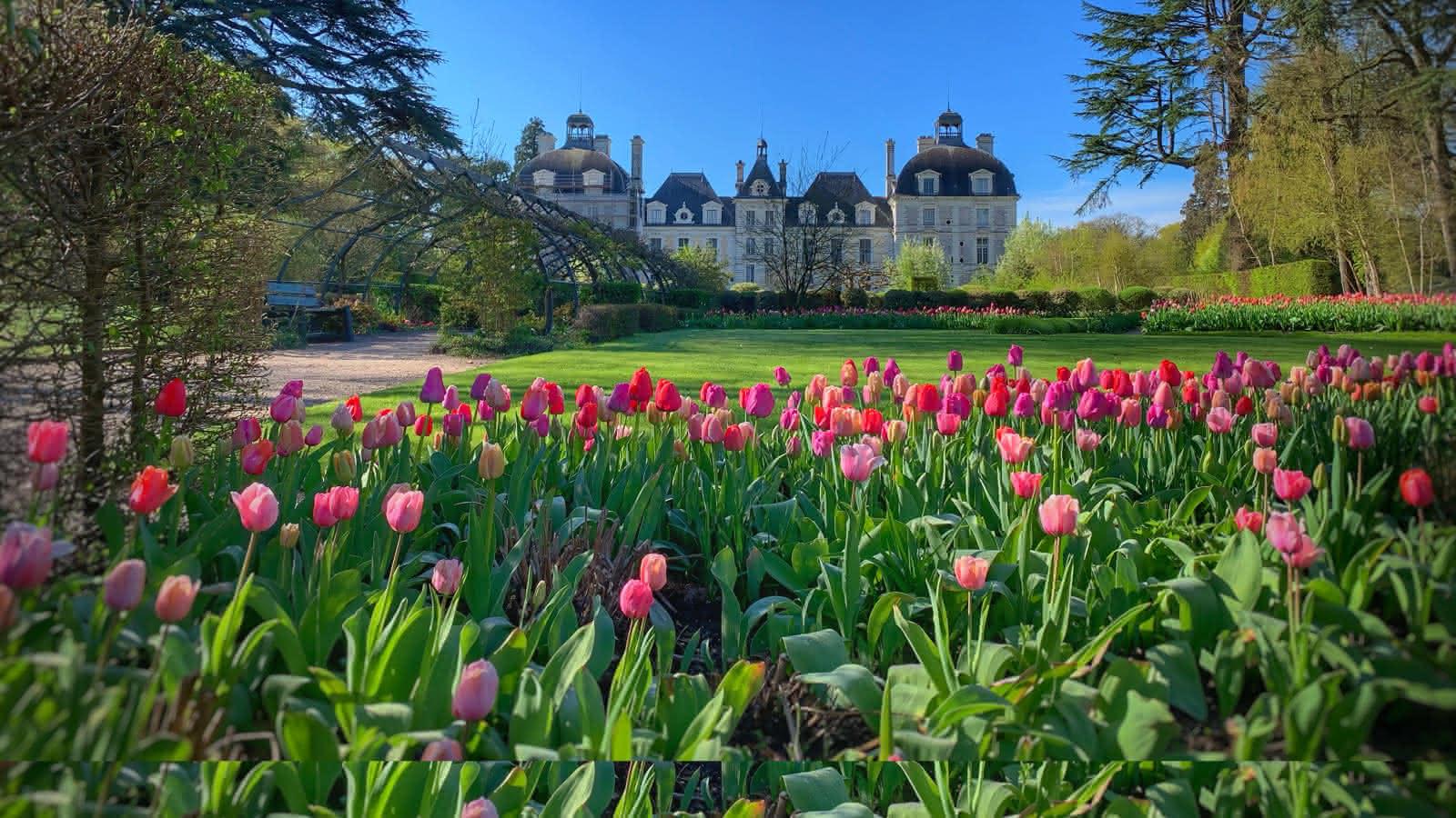 Tulipes-au-chateau-de-cheverny©Mir-Photos-ADT41 (22) copie