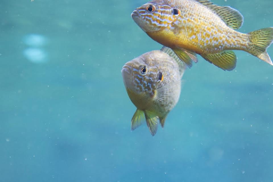 ZooParc de Beauval - Dome équatorial - Piranhas ©ZooParc de Beauval