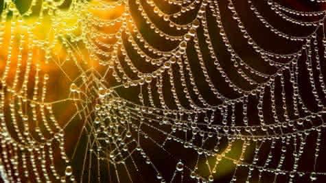 decouvertes-nature-sologne-toile-loir-et-cher-pixabay-770x550