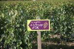 (1)domaine-de-montcy-mystere-grappe-or-cheverny©Domaine-de-Montcy