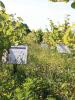 (1)domaine-de-montcy-vignes-conservatoires-cheverny©Domaine-de-Montcy