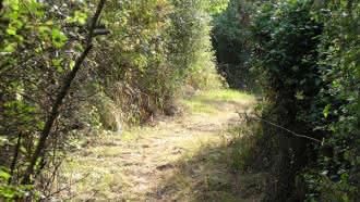 Pisteur en herbe sur l'Ile de la folie à Chaumont-sur-Loire