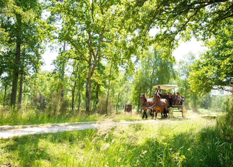 (2)promenade-en-caleche-chateau-de-chambord©Ludovic-Letot