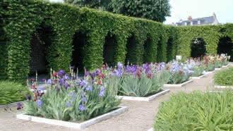 Jardin de simples et de fleurs royales