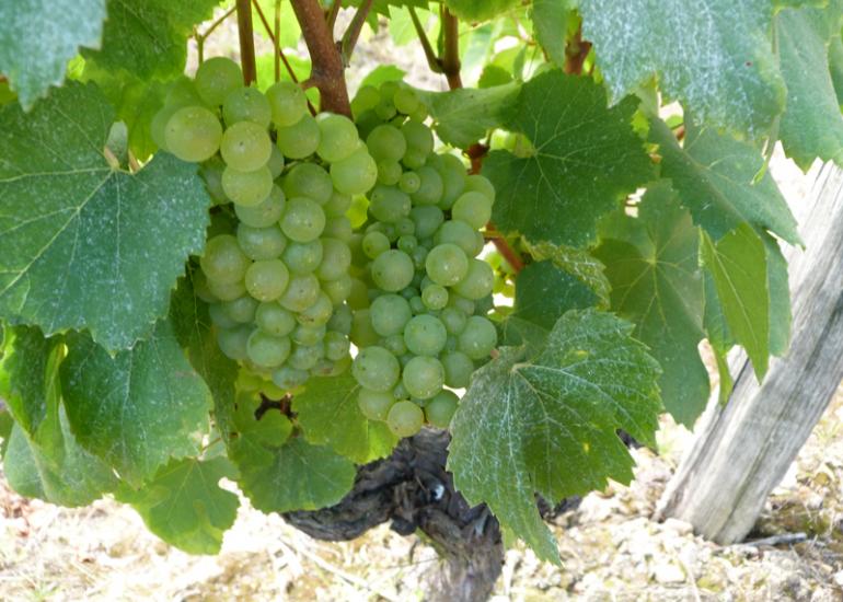 (5)vigne-en-loir-et-cher©CDT41-cbeulle2012