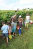 Activite-Petits-Curieux-Presse-toi-meme-le-raisin (1)