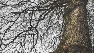 Exposition : «Les arbres aux mille visages»
