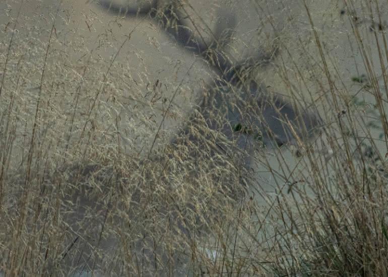 Affiche Sologne Nature Image-