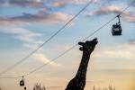 Girafe-Nuage-de-Beauval