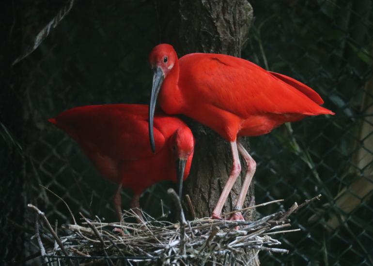 Oiseaux-Zooparc-de-Beauval